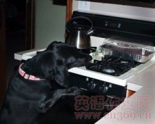 小心宠物在家惹祸 Pets can turn stoves, decor into fire hazar